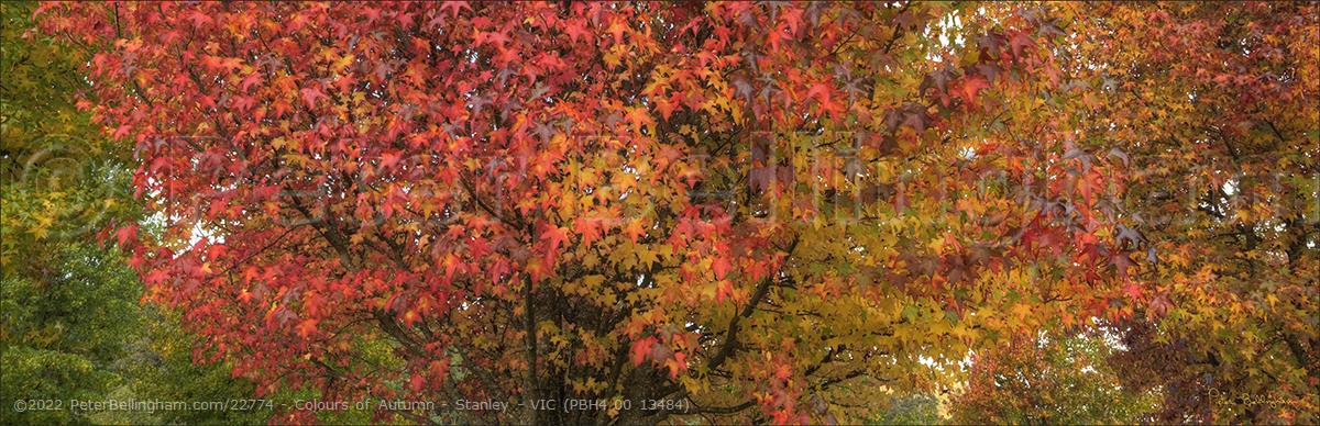 Peter Bellingham Photography Colours of Autumn - Stanley - VIC (PBH4 00 13484)