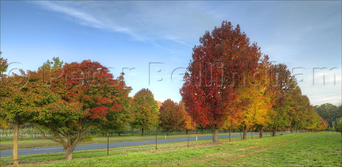 Peter Bellingham Photography Colours of Autumn - Stanley - VIC T (PBH4 00 13493)