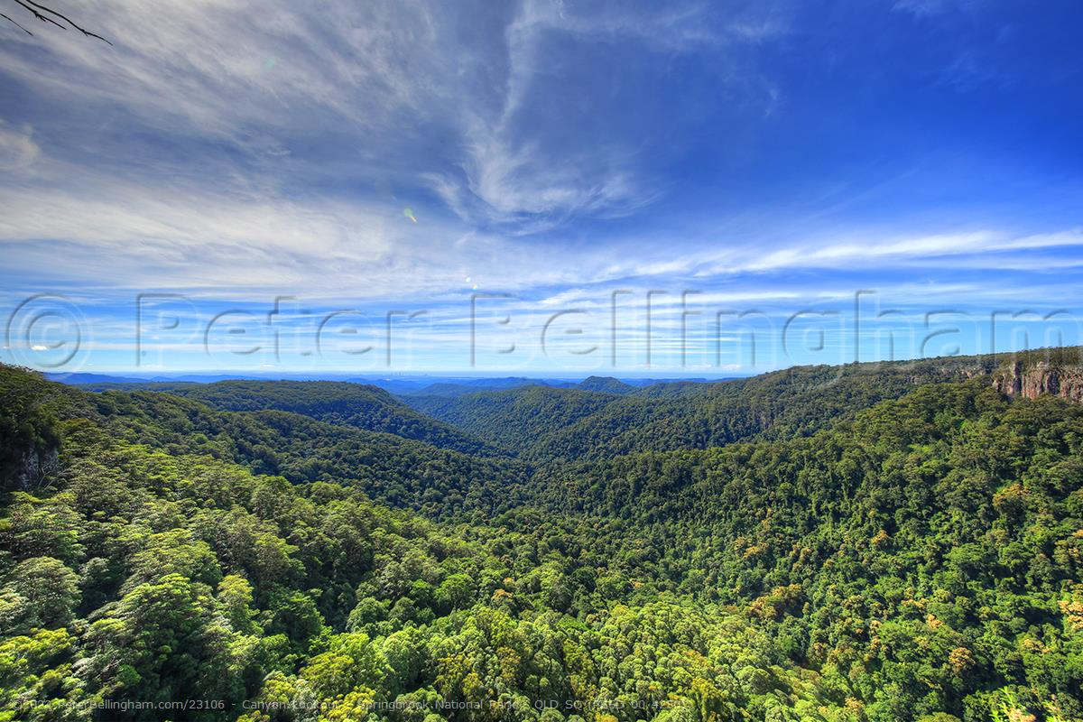 Peter Bellingham Photography Canyon Lookout - Springbrook National Park - QLD SQ (PB5D 00 4250)