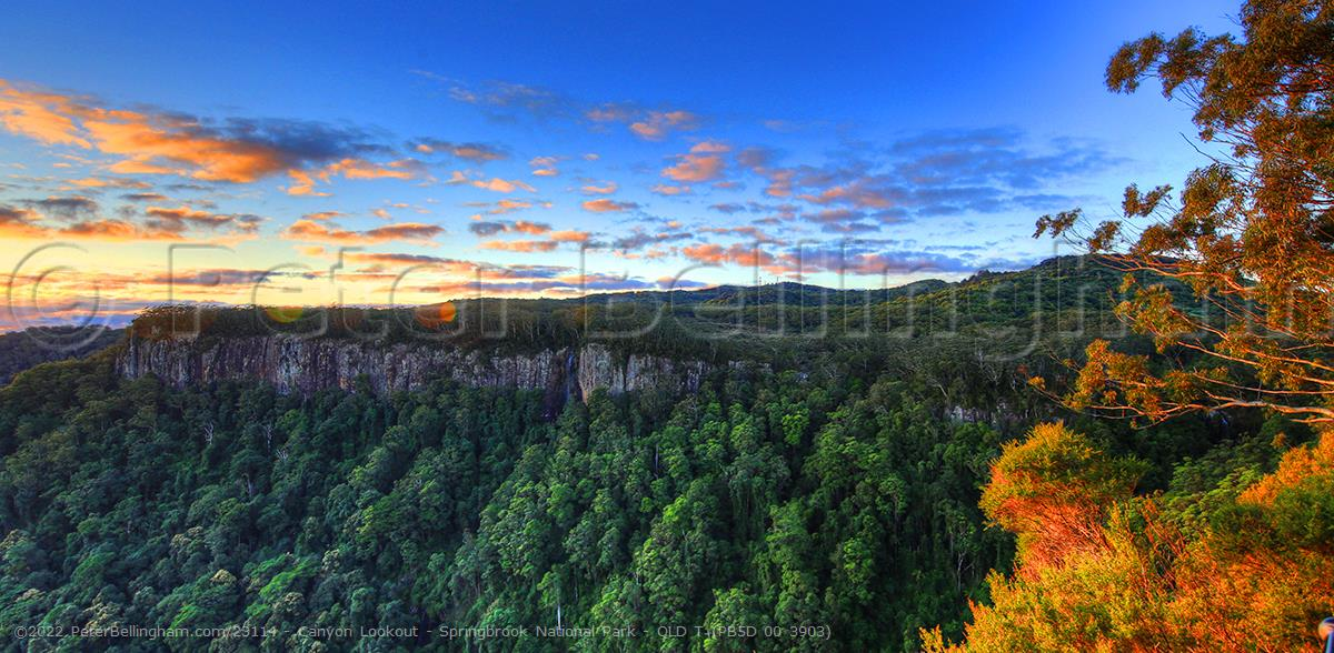 Peter Bellingham Photography Canyon Lookout - Springbrook National Park - QLD T (PB5D 00 3903)