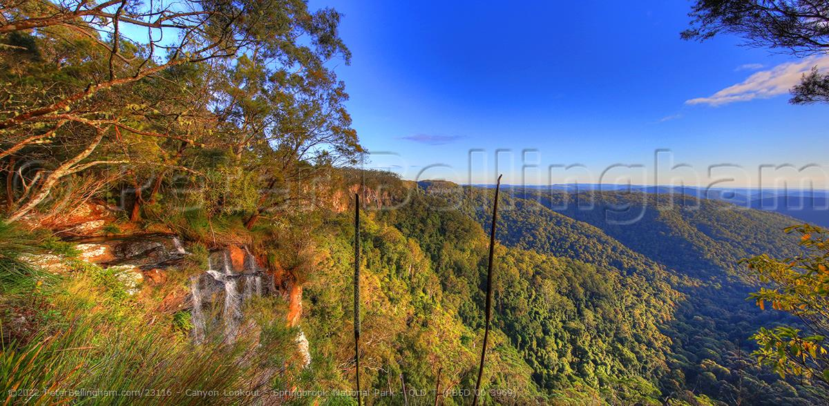Peter Bellingham Photography Canyon Lookout - Springbrook National Park - QLD T (PB5D 00 3969)