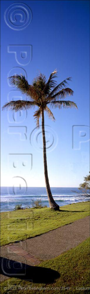 Peter Bellingham Photography Coolum Palm Tree Vertical - QLD (PB 00 1679)