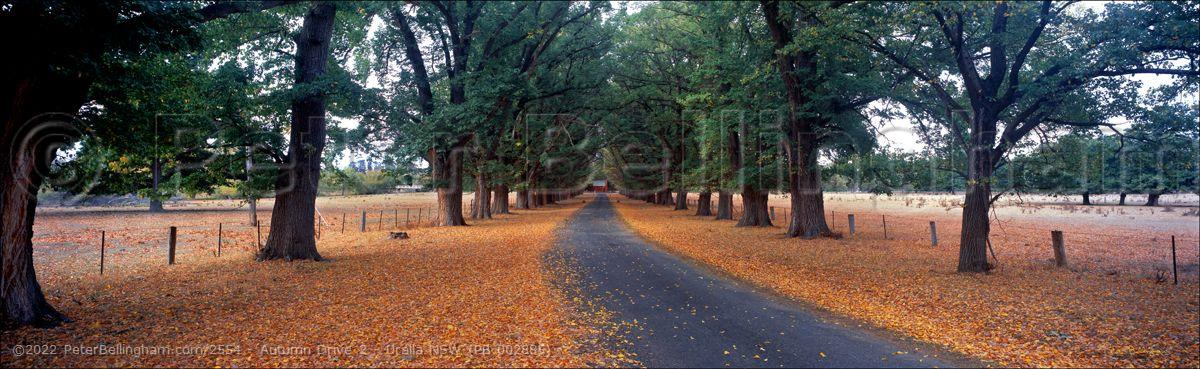 Peter Bellingham Photography Autumn Drive 2 - Uralla NSW (PB 002885)