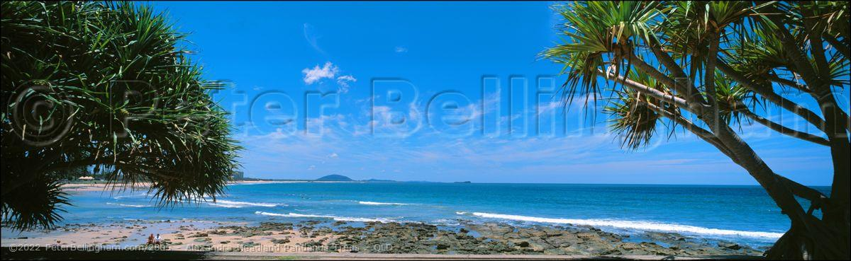 Peter Bellingham Photography Alexandra Headland Pandanus Trees - QLD