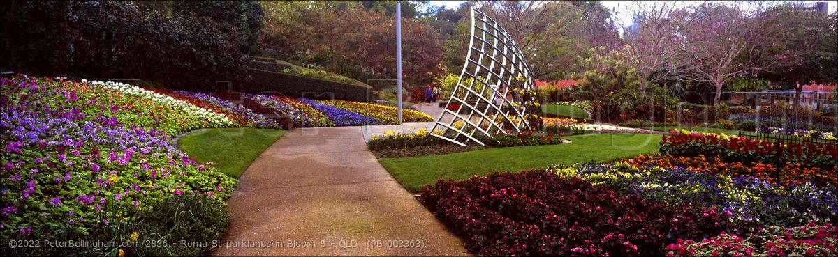 Peter Bellingham Photography Roma St parklands in Bloom 8 - QLD  (PB 003363)