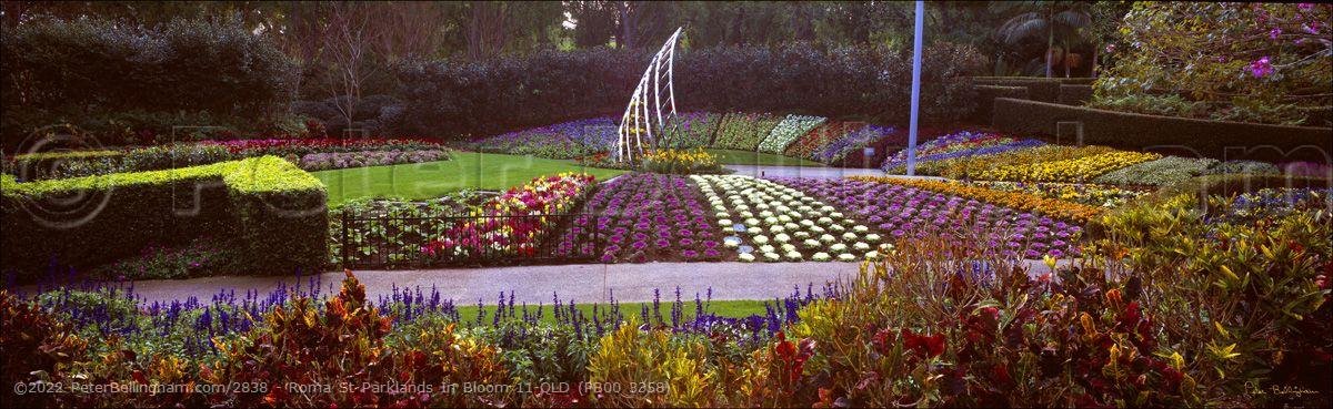 Peter Bellingham Photography Roma St Parklands In Bloom 11-QLD (PB00 3358)