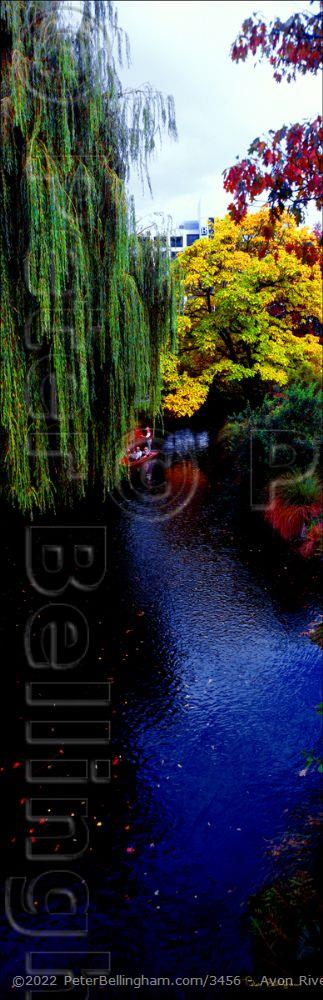 Peter Bellingham Photography Avon River and Hanging Trees - NZ (PB 002821)