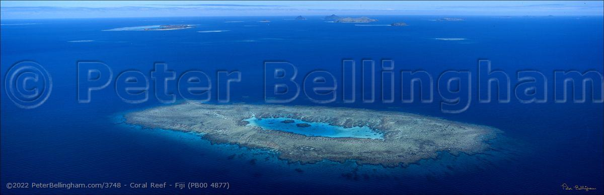 Peter Bellingham Photography Coral Reef - Fiji (PB00 4877)
