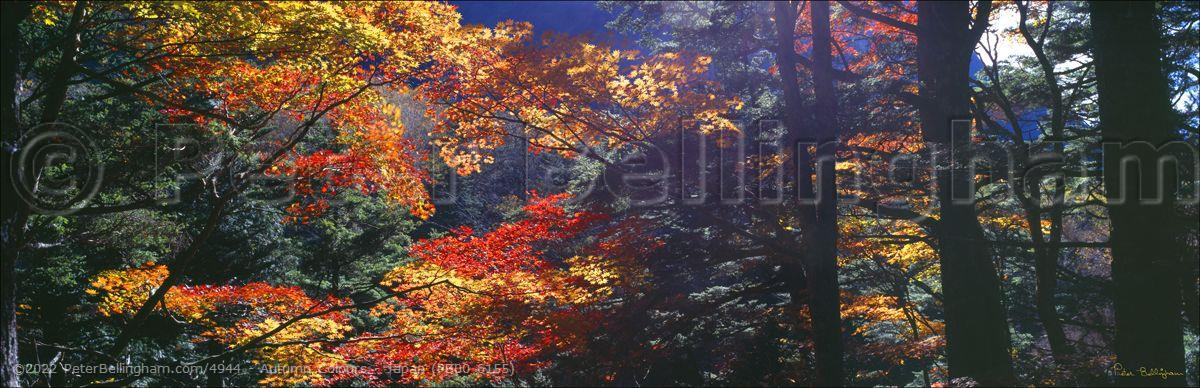 Peter Bellingham Photography Autumn Colours - Japan (PB00 6155)