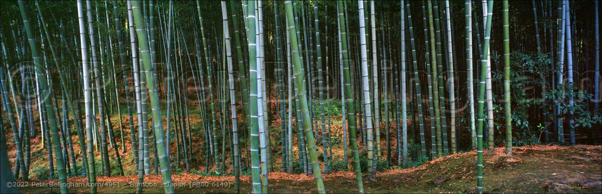 Peter Bellingham Photography Bamboo - Japan (PB00 6149)