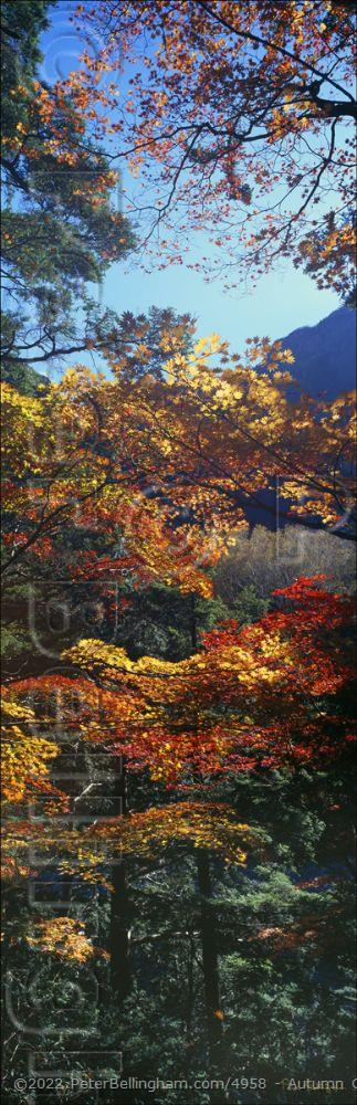 Peter Bellingham Photography Autumn Colours - Japan (PB00 6156)