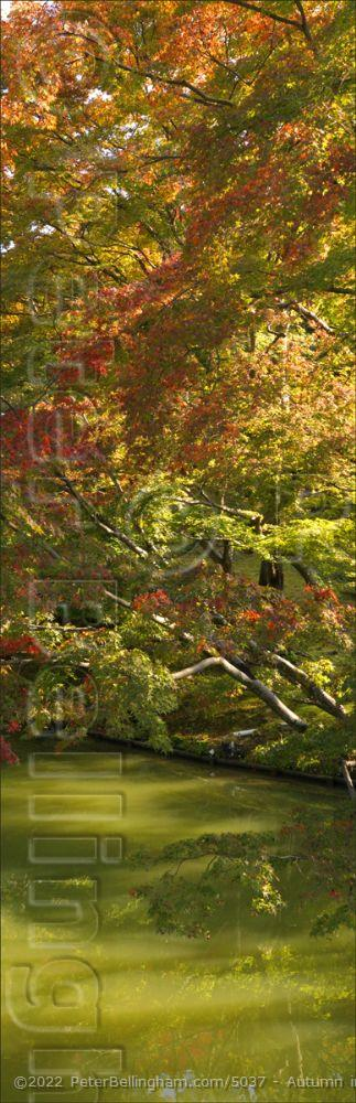 Peter Bellingham Photography Autumn in Japan V (PBH3 00 0020)